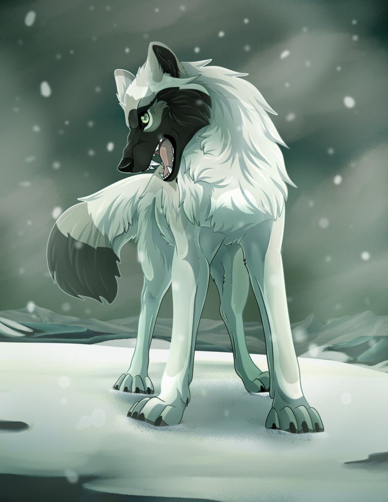 and white wolf Black anime