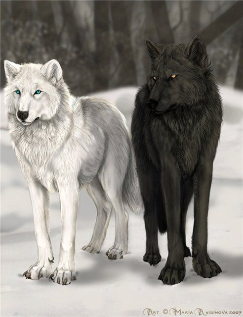 Black and white anime wolf
